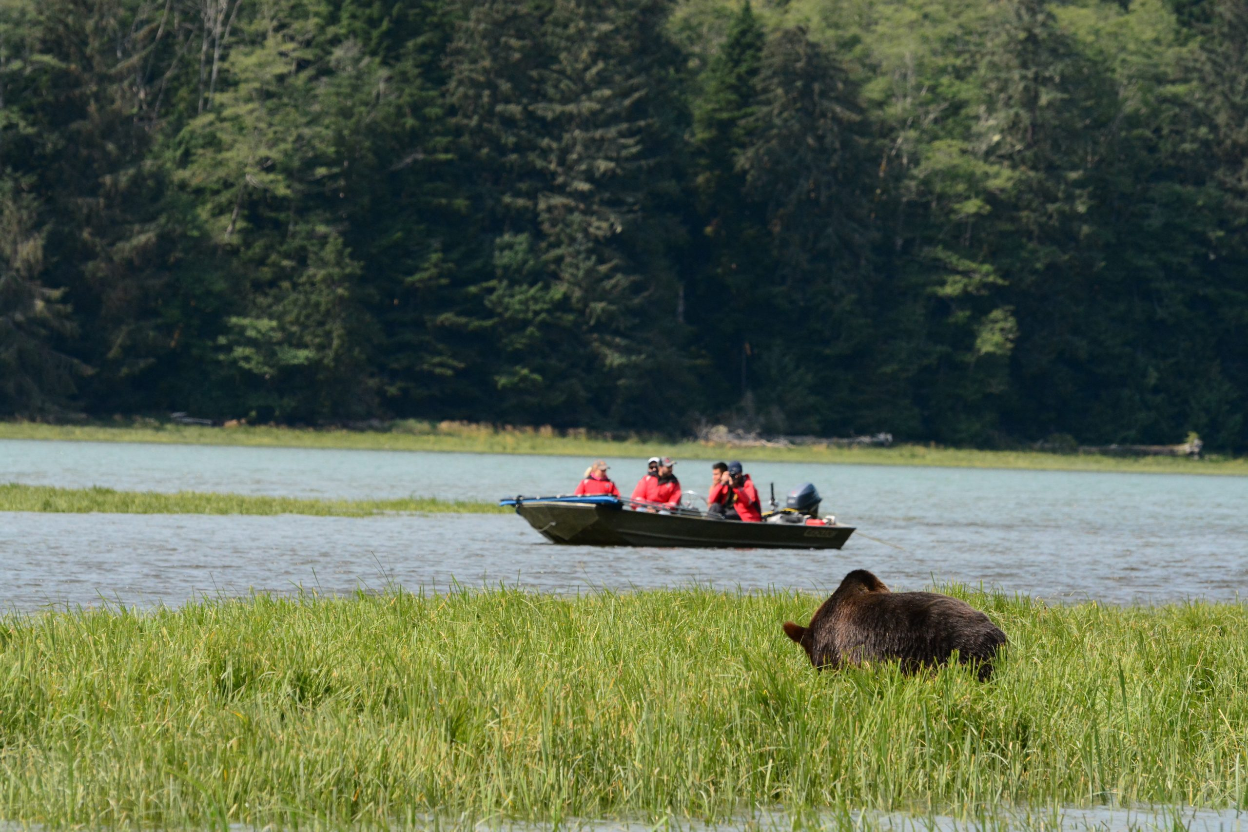 """<div id=""""tc-link""""><a href=""""https://grizzlytours.com"""" target=""""_blank"""">Knight Inlet Lodge</a></div>"""