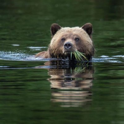 Commercial Bear Viewing Association