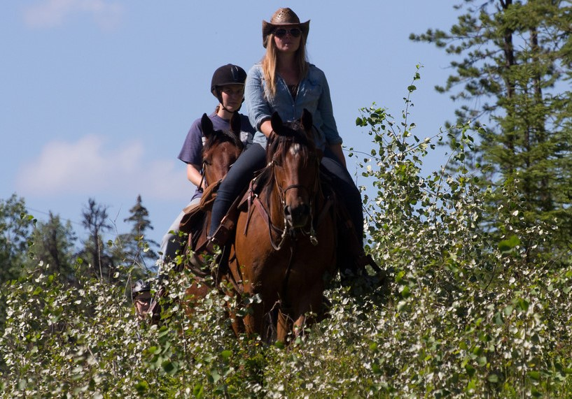 """<div id=""""tc-link""""><a href=""""https://www.freereinranch.com/"""" target=""""_blank"""">Free Rein Guest Ranch</a></div>"""