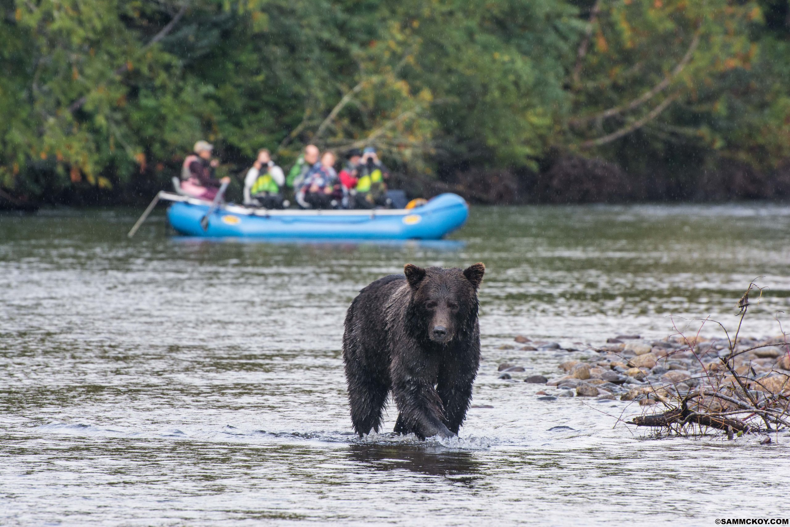 """<div id=""""tc-link""""><a href=""""http://www.bearviewing.ca/"""" target=""""_blank"""">Commercial Bear Viewing Association</a></div>"""